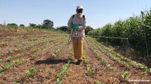 O termo agrotóxico no Brasil