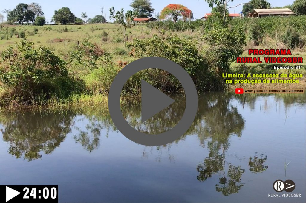 Episódio 31 - Clique na imagem para assistir o Programa RURAL VÍDEOS BR Assista: A abelhas nativas e a escassez da água na produção de alimentos