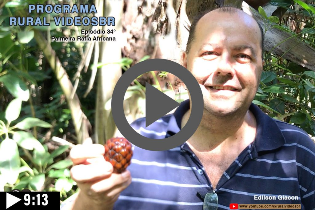Episódio 34 - Clique na imagem para assistir o Programa RURAL VÍDEOS BR Assista: Palmeira Ráfia Africana