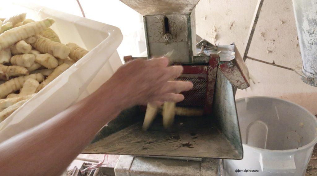 Para triturar pode ser usado uma máquina industrial ou ser ralada manualmente