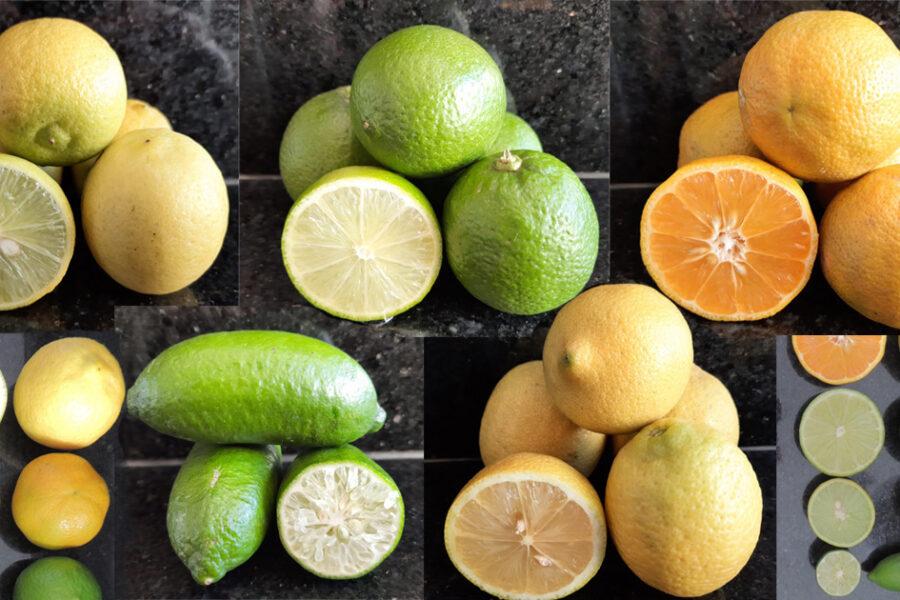 Limão: curiosidades, variedades e uso