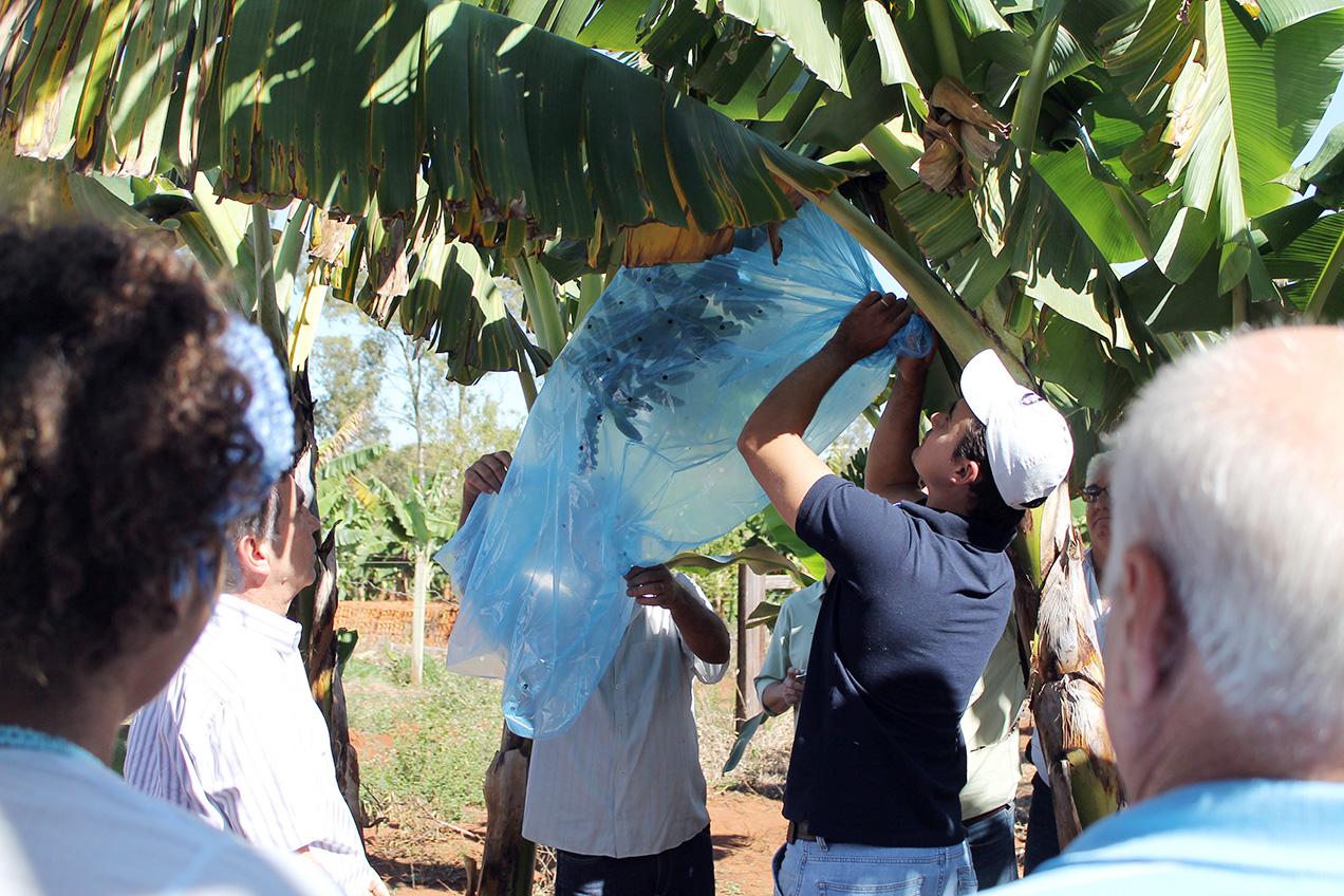 """Exemplo de capacitação: """"Cultivo da Banana"""", pelo terceiro ciclo de palestras sobre a fruticultura da Casa de Agricultura, regional de Limeira"""